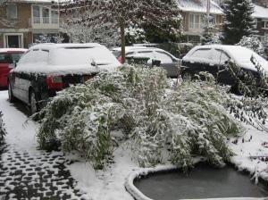bamboe in de sneeuw