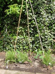15 mei 2010 - rozemarijn en tomaten